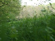 Risiedendo insieme nei campi di estate fotografie stock