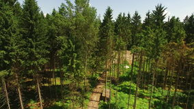 Rising Above Forest At Summer stock footage