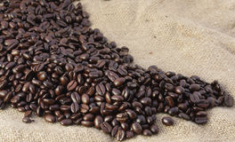 Free Rising Beans Royalty Free Stock Photos - 8662648