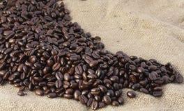 Rising beans Royalty Free Stock Photos