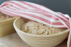 Rising bread dough. In banneton royalty free stock photos