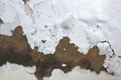 Rising Damp and Peeling Paint on Exterior Wall Royalty Free Stock Images
