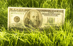 Rising dollars. One hundred dollars in the grass Royalty Free Stock Photos
