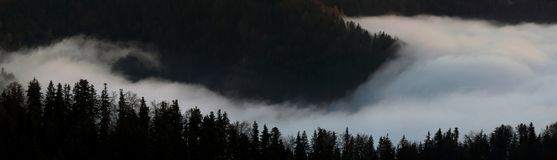 Rising Fog Around A Forest Slope Royalty Free Stock Photo