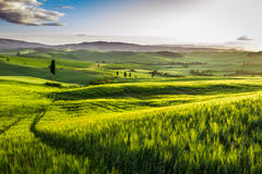 Rising fog in the valley at sunset, Tuscany stock photo