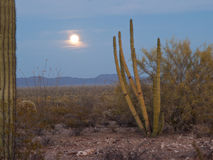 Rising Full Moon in the Desert. Full moon rising through wispy clouds over a desert vista with Saguaro and Organ Pipe cactus in the foreground and mountains in Stock Photography