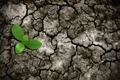 Rising grass on cracked ground. Global warming theme green grass rising on burned cracked ground stock photos