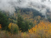 Rising mist. Mist rising from a mountain with autumn leaves Royalty Free Stock Images