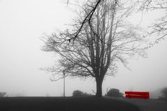 Rising mist over peaceful park with red solitary empty bench. Trees obscured by fog. Misty park in autumn. Benches under high tree Stock Images