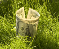 Rising money. One hundred dollars growing in the grass Stock Images