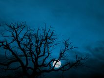 Rising moon. Tree branches in silhouette against a shining moon in a dark blue night sky Stock Photos