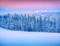 Rising moon above Gorgany ridge in winter Carpathian mountains. Stock Photo