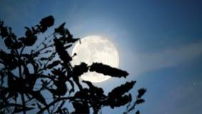Rising Moon stock video