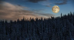 Rising Moon over the Boreal Forest. A full moon is rising over a snow covered conifer forest in northern BC, Canada stock photography