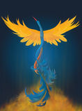Rising Phoenix Digital Painting. A colorful digital painting of rising phoenix Royalty Free Stock Photos