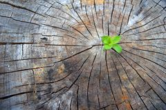 Ecology concept. Rising sprout of old wood and symbolizes the struggle for a new life. Rising sprout of old wood and symbolizes the struggle for a new life royalty free stock photos