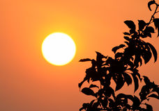 Rising sun Royalty Free Stock Photo