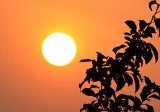 Rising sun. Beautiful rising sun which illuminates the tree's branch royalty free stock photo