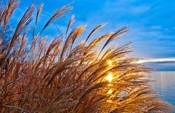 Rising sun. Shot through wild plants stalk Stock Images