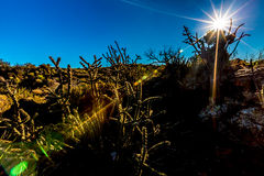 Rising sun on a cactus landscape. Beautiful Desert Landscape in the River of Fire Area in New Mexico with Cactus and Black Lava Rock Flow Stone. Rising sun on a royalty free stock photos