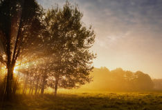 Rising Sun in Forest and Meadow Royalty Free Stock Images