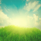 Rising sun and green grass under blue sky. Rising sun and fresh green grass under blue sky, retro toned Royalty Free Stock Image