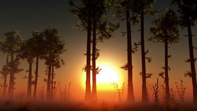 Rising sun light in forest stock video footage