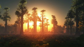 Rising sun light in forest stock video