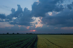 Rising sun over agricultural land Royalty Free Stock Photography