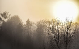 Rising sun over autumn forest on cool morning - nature backgroud. Stock Photography