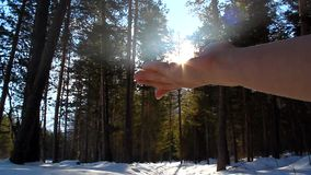 Rising Sun on the palm of the hand in a pine forest stock video