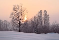 The rising sun through the trees in winter. The rising sun shines through the bare trees. Winter dawn, orange sky. The snow drifts ahead. Pink color. Pure nature stock image