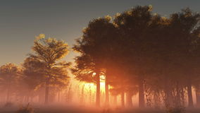 Rising sunrise in forest with fog stock video
