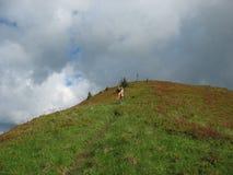 Rising to mountains Stock Photos
