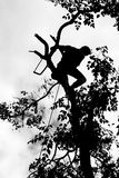 Risk av skogsarbetaren arkivfoto