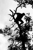 Risk of lumberjack Stock Photo