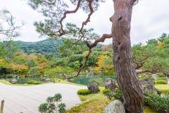 riskerade den trädgårds- makroen krattade sanden zen för stenar tre Royaltyfri Fotografi