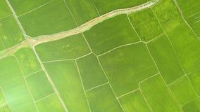 Riskoloni i asiatisk bysurrsikt Gräsplanrisfält för flyg- sikt jordbruks- industri Bruka och stock video