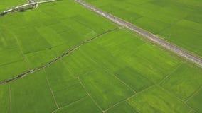 Riskoloni och järnväg flyg- sikt Risfält för surrsiktsgräsplan i by jordbruks- industri Bruka och lager videofilmer