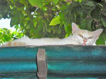 Risky kitten on a roof royalty free stock photos