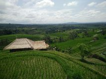 Rislantgård bali indonesia Arkivfoto