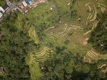 Riso Bali, Indonesia del campo di vista aerea fotografia stock libera da diritti
