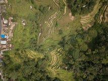 Riso Bali, Indonesia del campo di vista aerea immagine stock