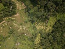 Riso Bali, Indonesia del campo di vista aerea immagini stock