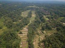 Riso Bali, Indonesia del campo di vista aerea immagine stock libera da diritti