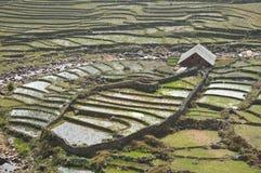 Riso che coltiva con la cabina dell'agricoltore sulla montagna del Vietnam Fotografie Stock Libere da Diritti