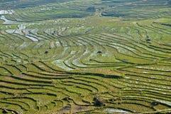 Riso che coltiva con la pianura di agricoltura dell'agricoltore su una montagna Fotografia Stock