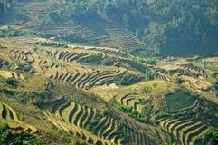 Riso che coltiva horiculture sulla montagna del Vietnam Fotografia Stock Libera da Diritti
