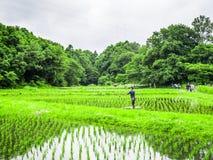 Riso del trapianto degli agricoltori in un campo nel Giappone Fotografia Stock Libera da Diritti