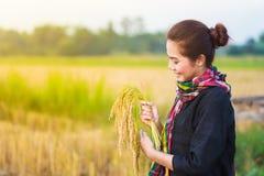 Riso della tenuta della donna dell'agricoltore nel campo Fotografia Stock Libera da Diritti